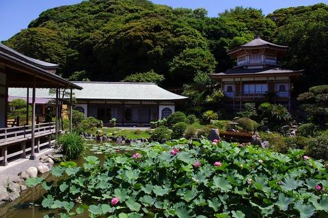 Komyojihasu1107143