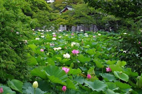 Hachimanguhasu110729