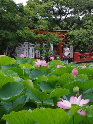 Hachimanguhasu1107294_2