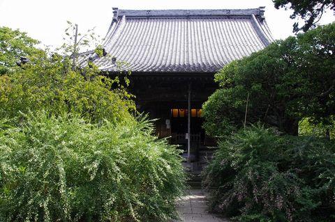 Hokaijihagi1109173