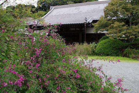 Jokomyojihagi110917