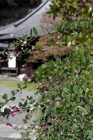 Jokomyojihagi110928