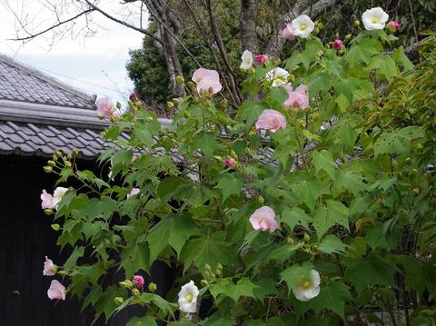 Tokeijisuifuyo111004