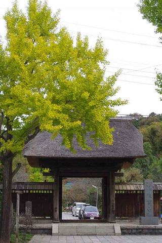 Ryuhojiicho111109