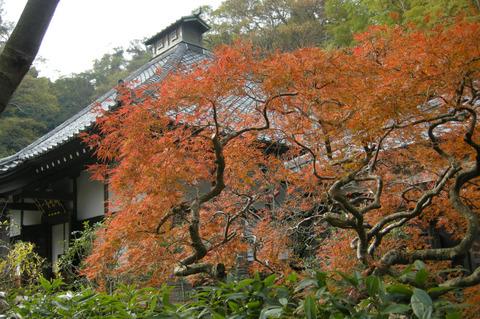 Kosokujikoyo111129