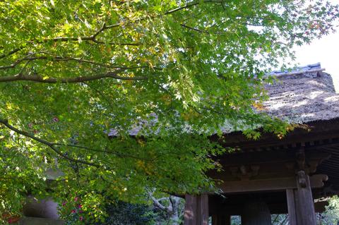 Hokokujikaede111205