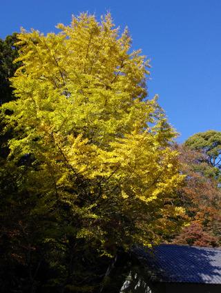 Tokeijiicho1112122