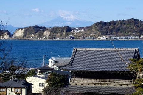 Zaimokuzafuji1201053