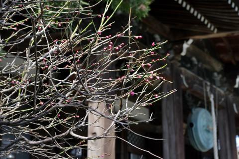Hongakujiume120224
