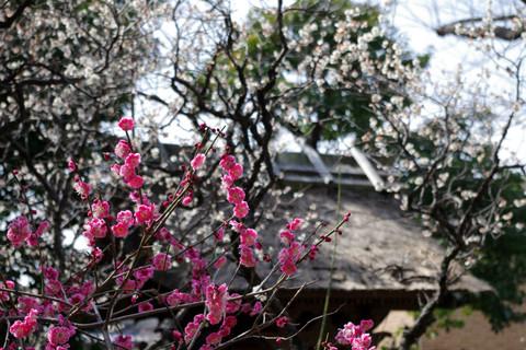 Hokaijiume1203163