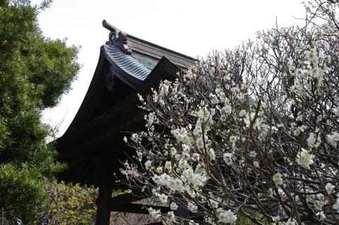 Hokaijiume1203164