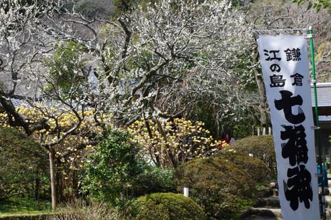 Jochijiume1203225