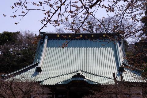 Komyojisakura120401