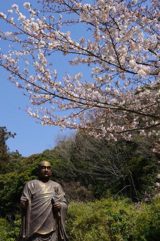 Myohonjisakura1204054