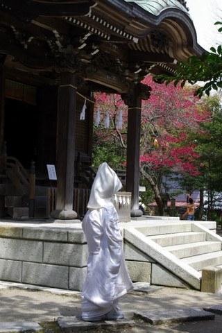 Goryojinjahimomo1204103