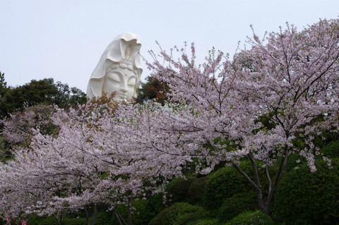 Ofunakannonsakura120416