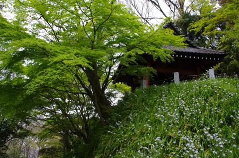 Myohonjisyaga1204212