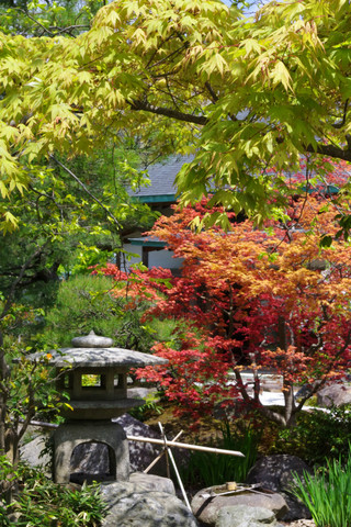 Hachimanguharumomiji120424