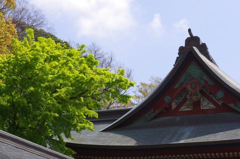 Hachimangusinryoku120424