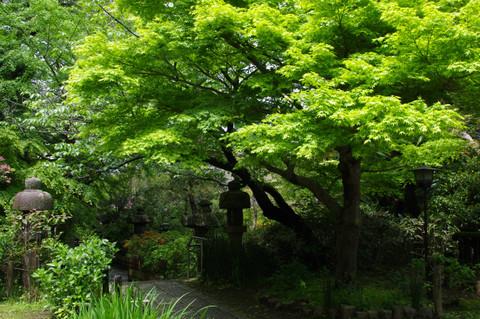 Ankokuronjisinryoku120504