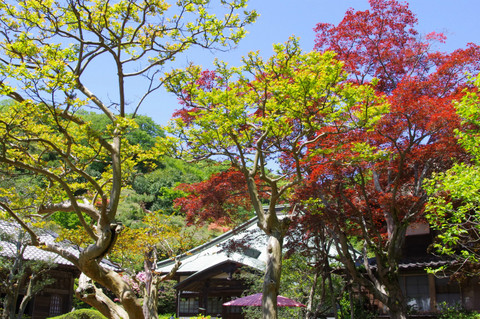 Kaizojisinryoku120505