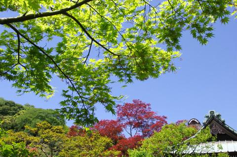 Kaizojisinryoku1205052