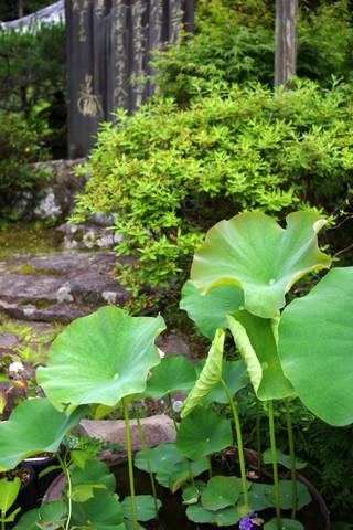 Kosokujihasu120611