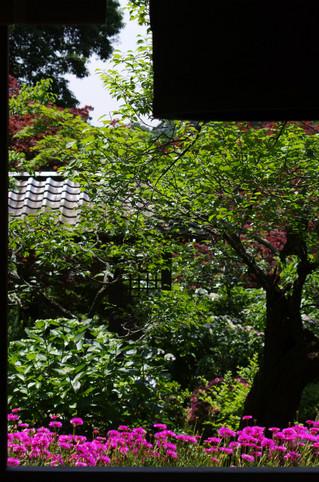 Kaizojimatubagiku1206142