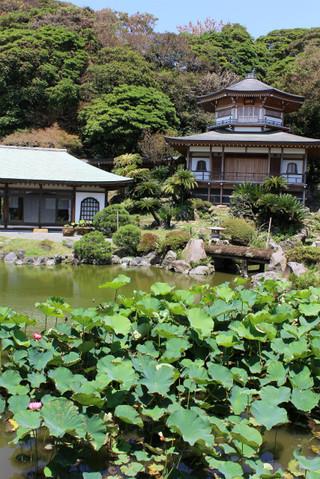 Komyojihasu120709