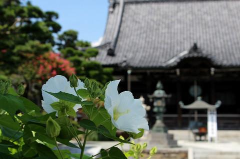 Hongakujifuyo1208172