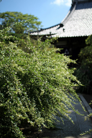 Hokaijihagi1209245