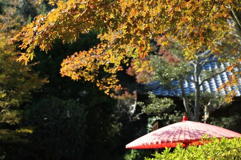 Kaizojikoyo1211203