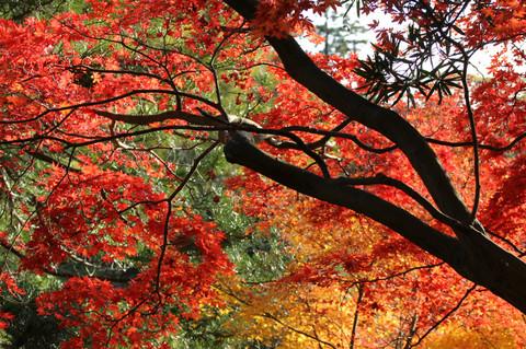 Kakuonjikoyo1212015_2