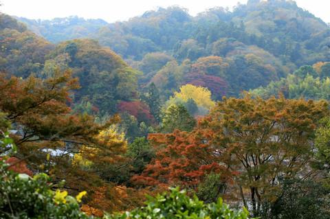 Kinubariyama121201