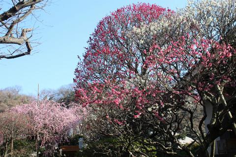 Hokaijiume130304