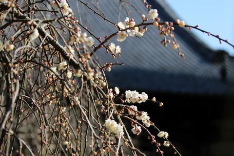 Hokaijiume1303044