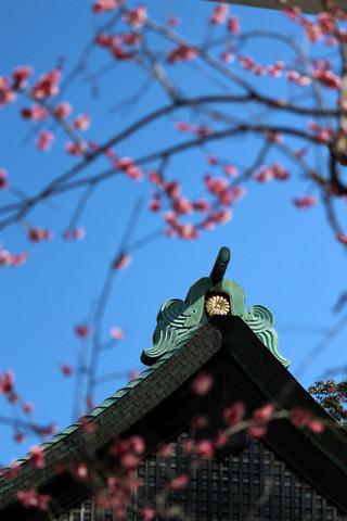 Kamakuraguume130306