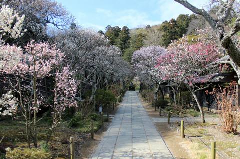 Tokeijiume130311