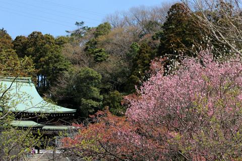 Ryuhojikobai130315