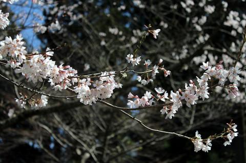 Jyochijitatihigan1303212