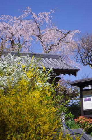Koshojimonzen130321