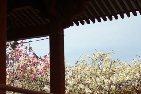 Hachimangufuji1304092