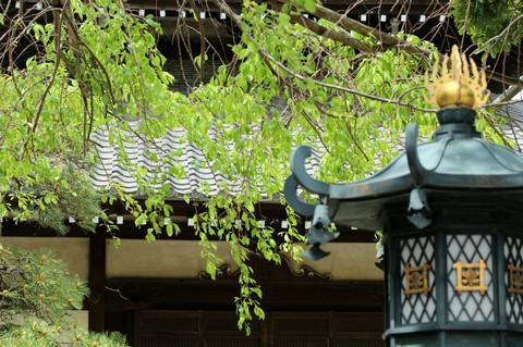Hongakuji130409