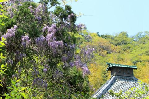 Kosokujifuji130415