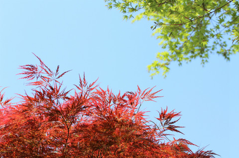 Kosokujimomiji130415