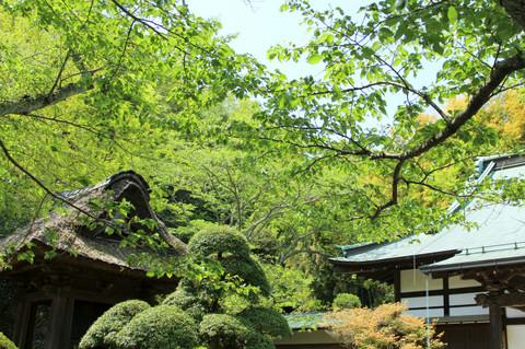 Hokokujisinryoku130418