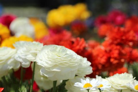 Flowerfesta1305082