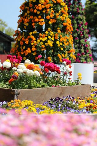 Flowerfesta1305083
