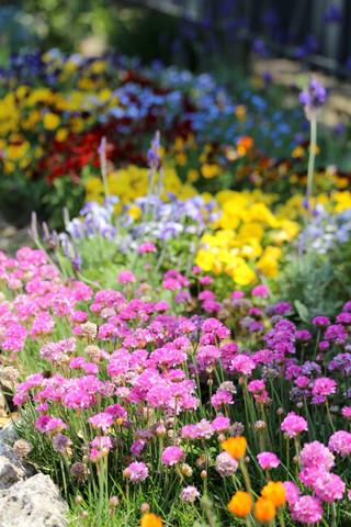 Flowerfesta1305086