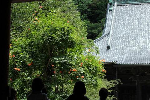 Myohonjinozenkazura130627